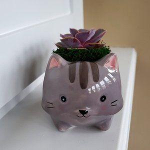 """Ceramic Cat Planter with Live Succulent, Grey 5"""""""